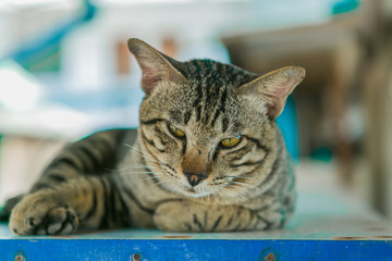 Cat relaxes on the wooden table