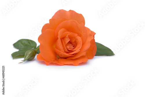 canvas print picture Rose in Orange