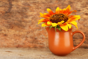 Beautiful sunflower in pitcher on table on wooden background