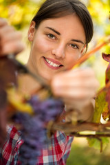 Smiling girl harvesting grape