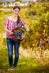 Vintner in vineyard