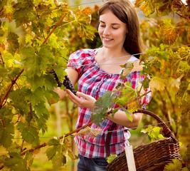 Female grape picker