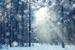 magical winter forest, a fairy tale, mystery - 68945893