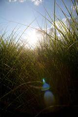 Himmel über Graslandschaft und Himmel