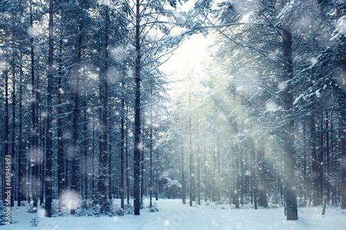 Leinwanddruck Bild magical winter forest, a fairy tale, mystery