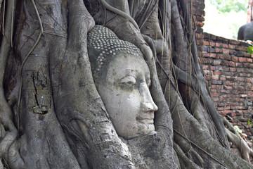 Buddha Statue Head in Banyan Tree, Thailand