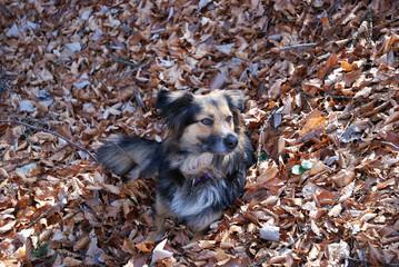 Cane fra le foglie