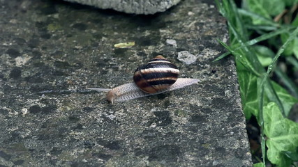 snail slides across