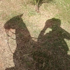 Sombra proyectada de caballo y jinete