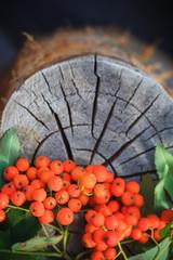 Fall background rowan fruits old stump