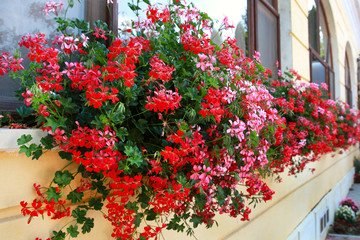 Flowers Decoration of Wall and Windows