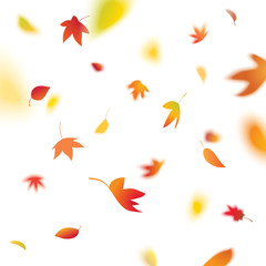 autumn leaves falling, vector illustration