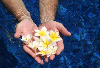 Белые цветы в руках