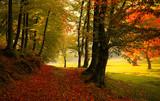 Fototapeta Autumn forest road