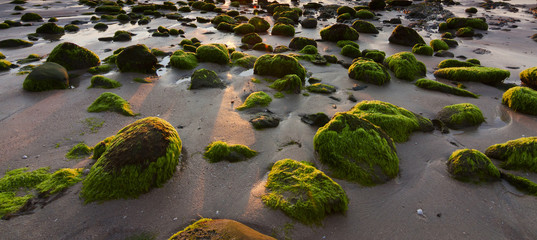 Rocks with green moss