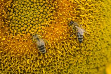 Bee.Пчела