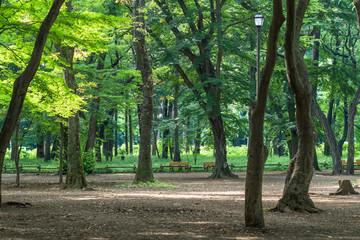 Summer Inokashira park