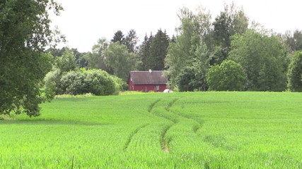 old country painted house surrounded by trees along corn field