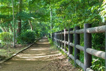 Promenade of the Inokashira park