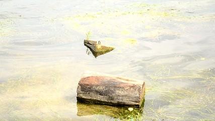 Shore of the lake.