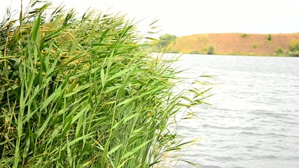 Reeds in the water.
