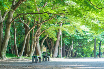 Bench of the Inokashira park