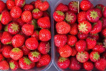 Fresh delicious strawberries