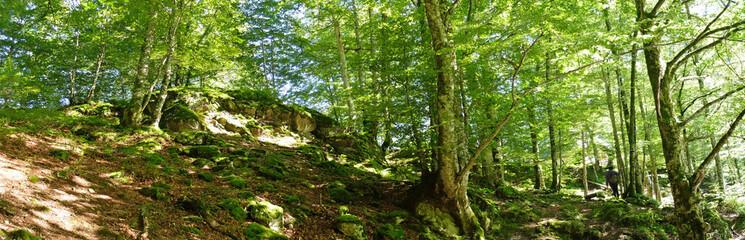 Forêt de hêtres, Bethmale, Ariège