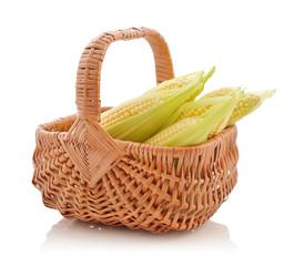 Corn cobs in wicker basket