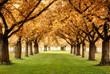 Paradiesische Herbstszene