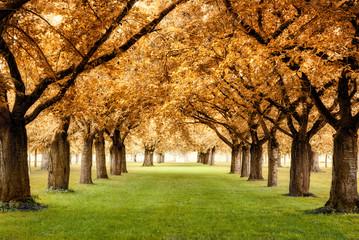 fototapeta rajska jesień