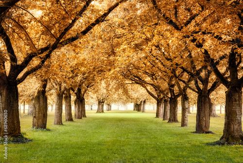 Fototapeta samoprzylepna Paradiesische Herbstszene
