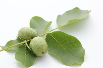 feuilles et noix