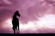 Obrazy na płótnie, fototapety, zdjęcia, fotoobrazy drukowane : horse silhouette