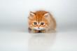 canvas print picture - Kleine Katze auf der Lauer