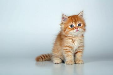 Kleine Katze sitzt