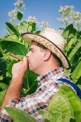 farmer on the tobacco field