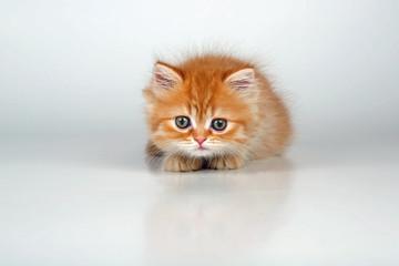 Kleine Katze auf der Lauer