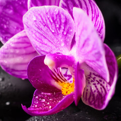 Spa concept of zen stones, blooming twig lilac stripped orchid,
