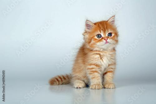 Foto op Plexiglas Tijger Kleine Katze sitzt
