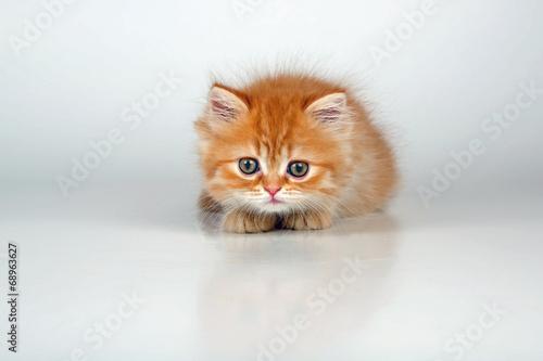 canvas print picture Kleine Katze auf der Lauer