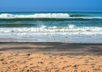 Beautiful seascape with foamy waves, white bird on the beach and