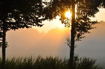 Foggy Sun 1