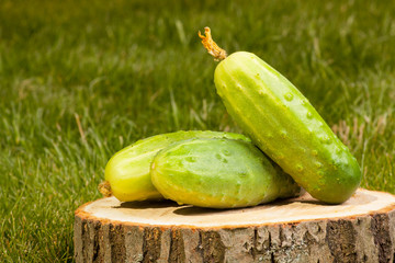 cucumbers on a tree stump