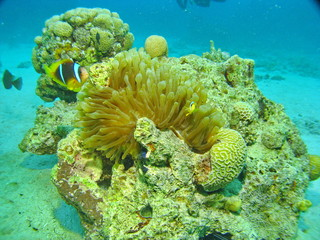 Sea life - coral and fish