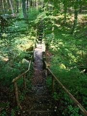 Waldschlucht mit einem Wanderweg