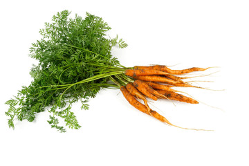 freshly picked carrots isolated on white