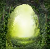 Fototapety magic forest