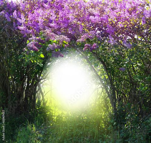 Aluminium Lilac Magic spring forest landscape