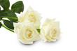 Obrazy na płótnie, fototapety, zdjęcia, fotoobrazy drukowane : white roses isolated on the white background